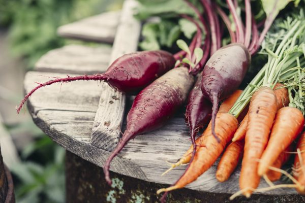 Organic vegetables. Freshly Picked Beetroot and Carrots.